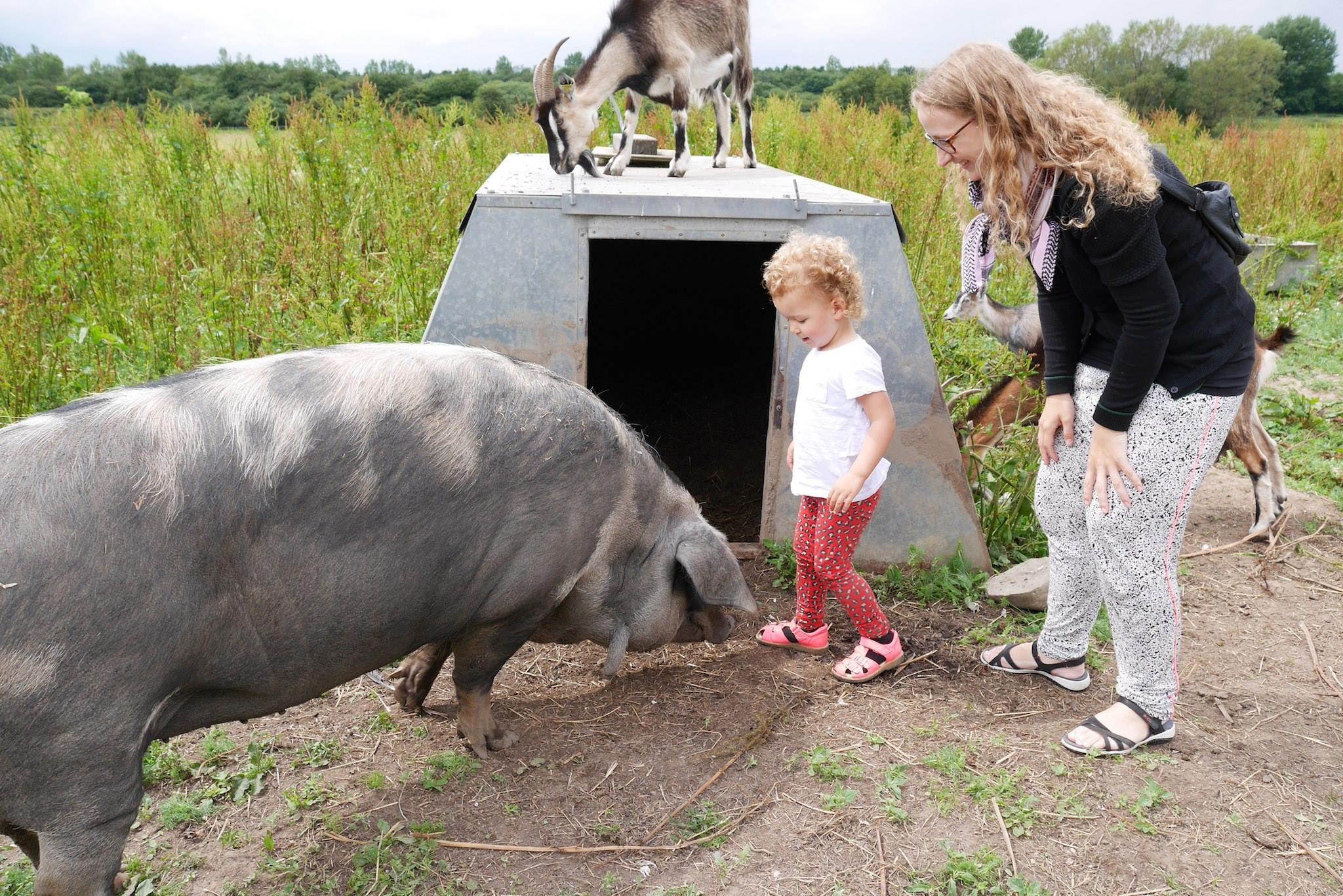 glæde ved dyr