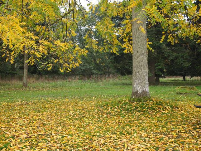 Knuthenborg park i efterårsferien