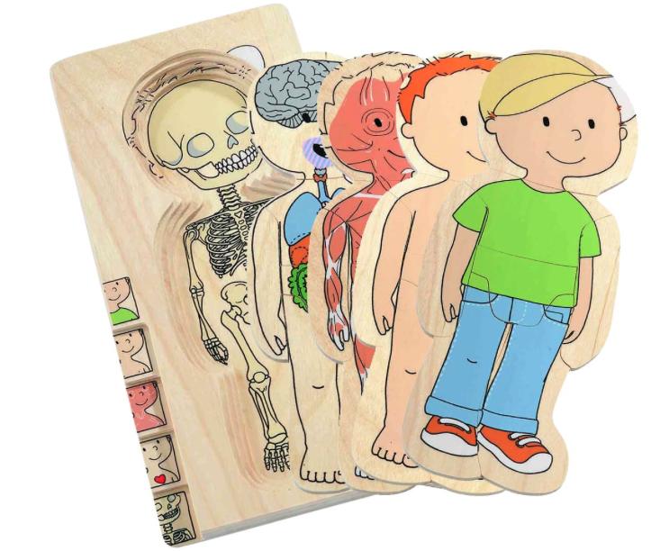 Anatomi puslespil